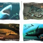 Stamps (left to right): 45¢ Great White Shark, 30 May 1997; 45¢ Pacific Halibut, 30 May 1997; 45¢ Atlantic Sturgeon, 30 May 1997; 45¢ Bluefin Tuna, 30 May 1997
